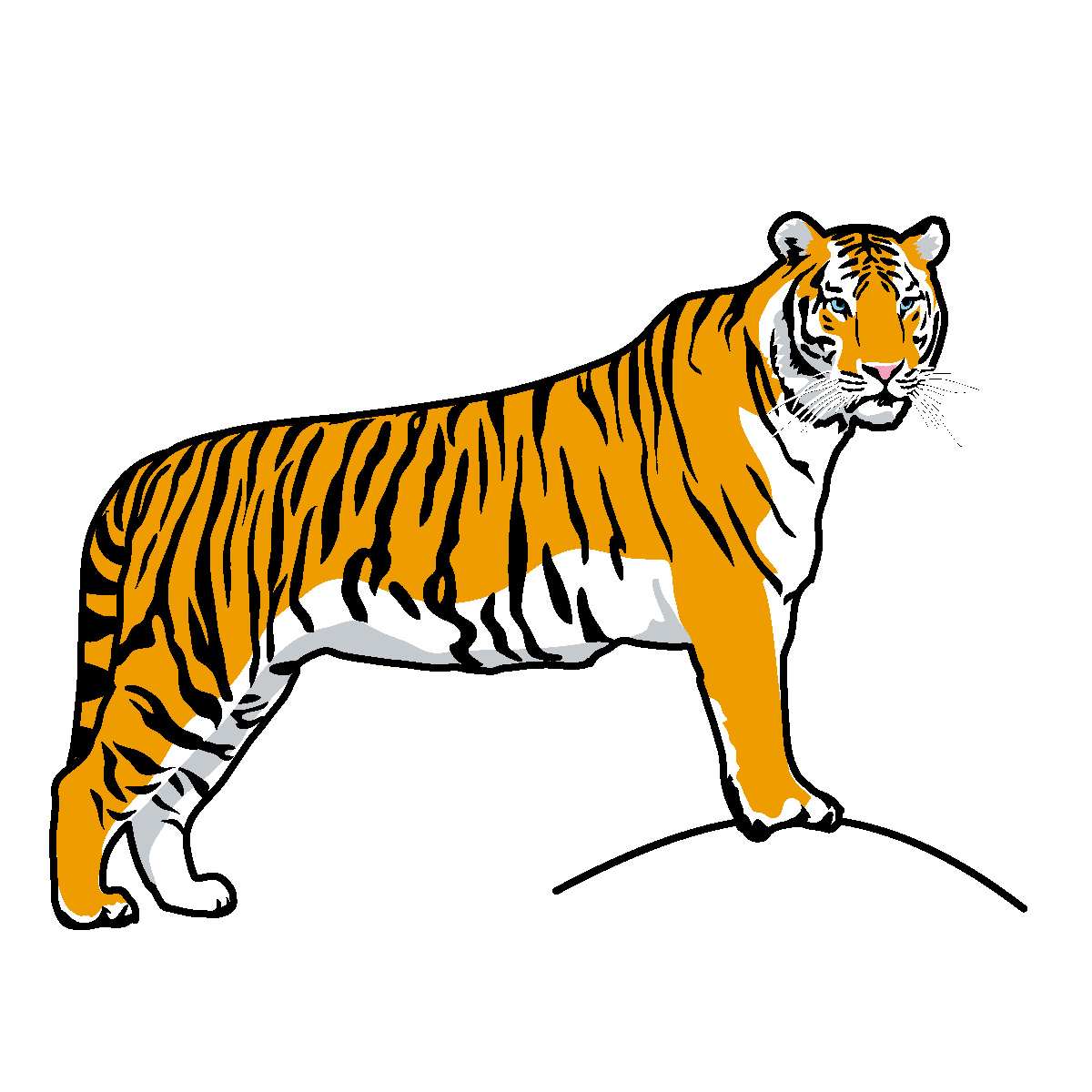 Tiger clipart #1, Download drawings