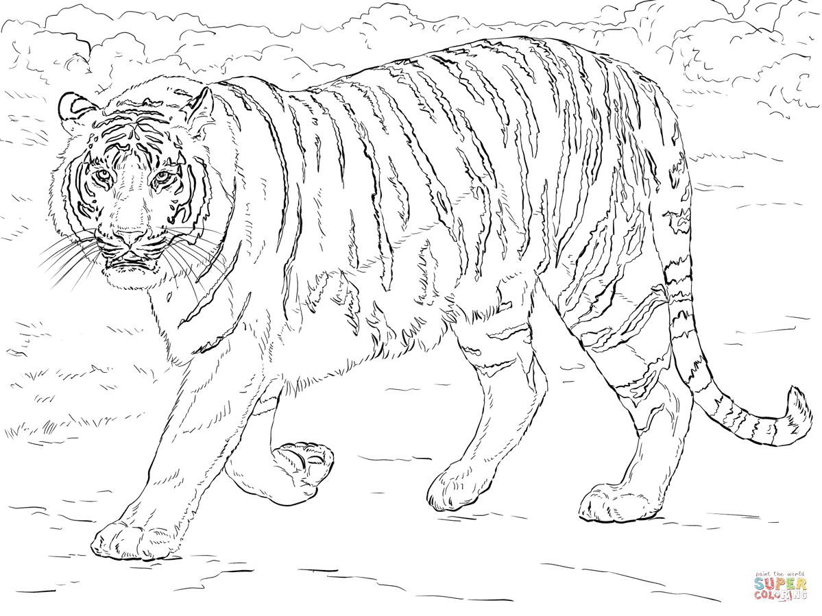 Tiiger coloring #9, Download drawings
