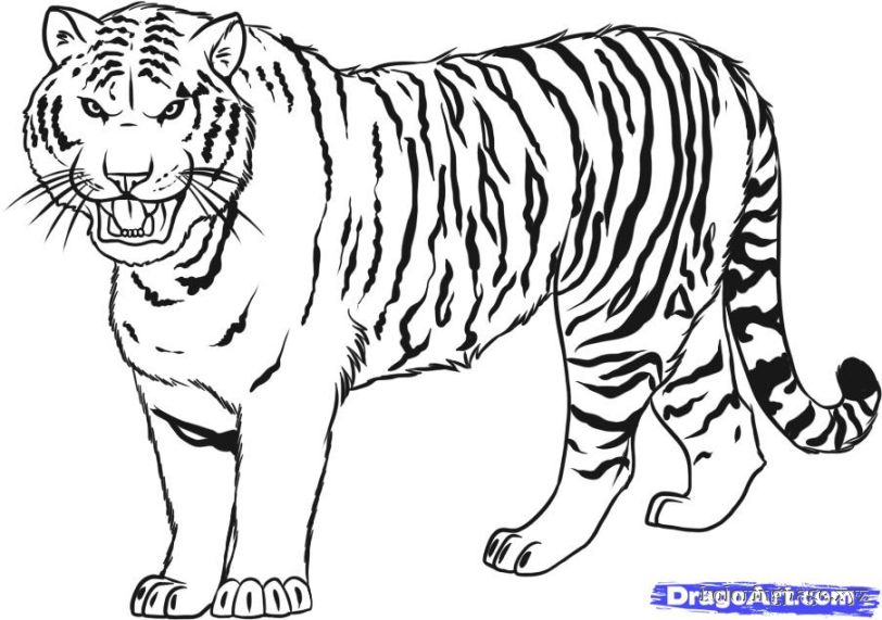 Tiiger coloring #16, Download drawings