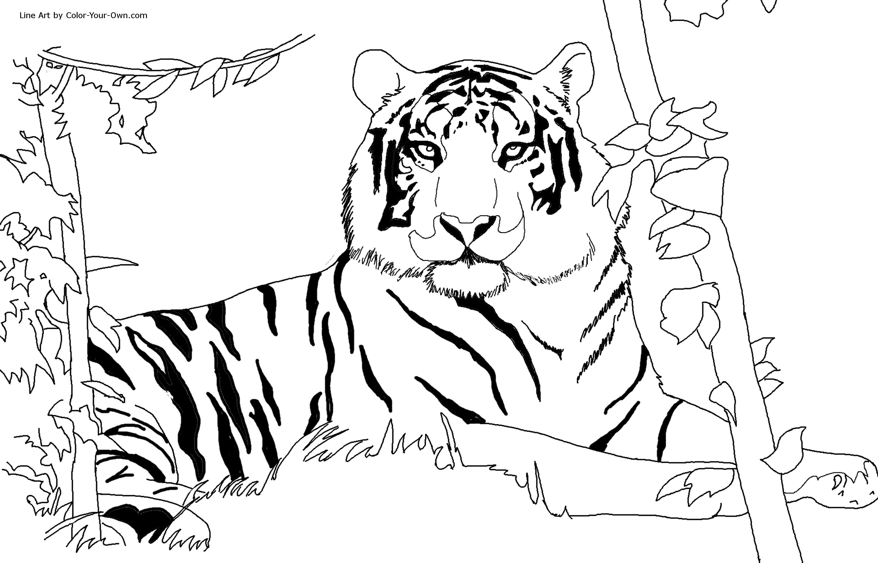 Sumatran Tiger coloring #5, Download drawings