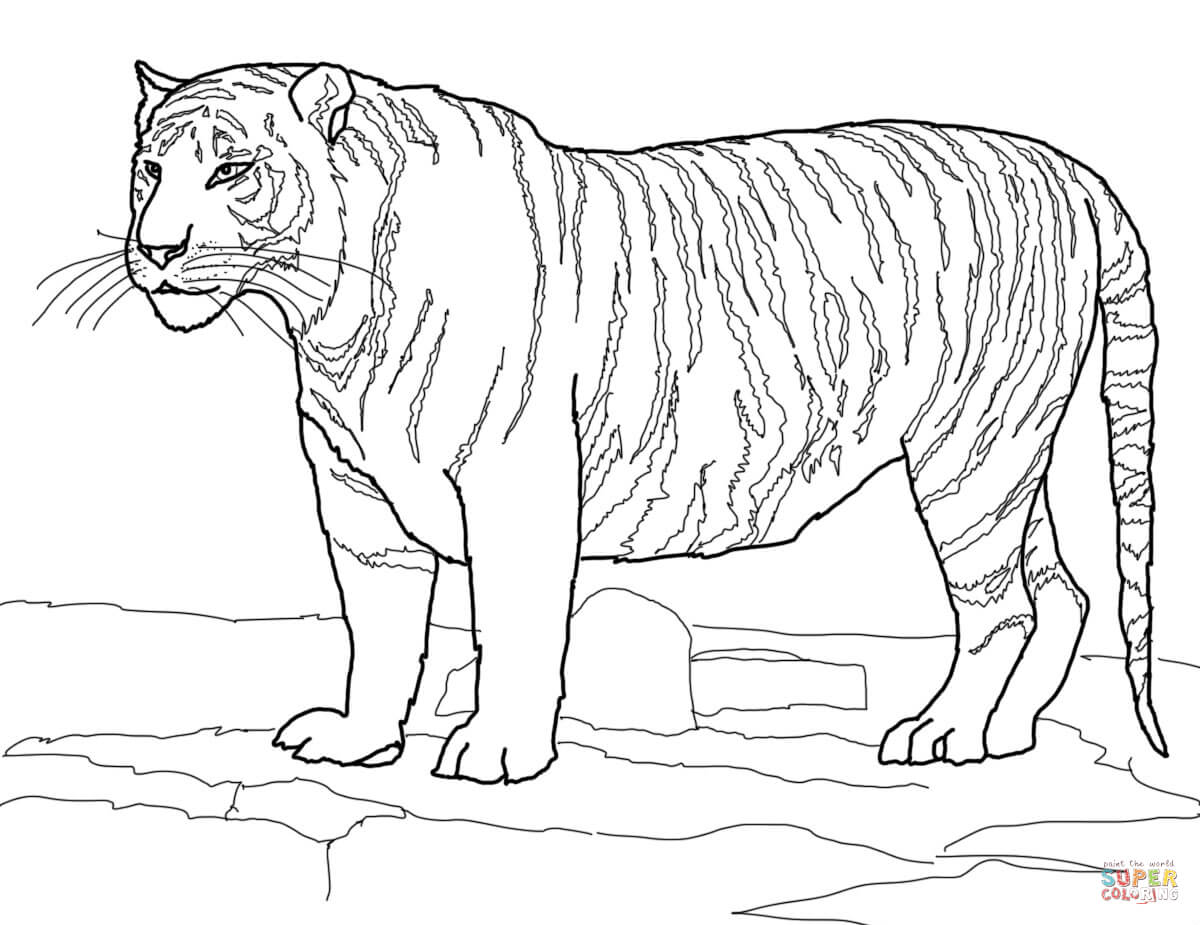 Tiiger coloring #10, Download drawings