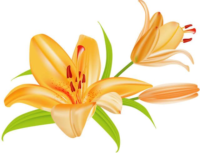 Tiger Lily clipart #17, Download drawings