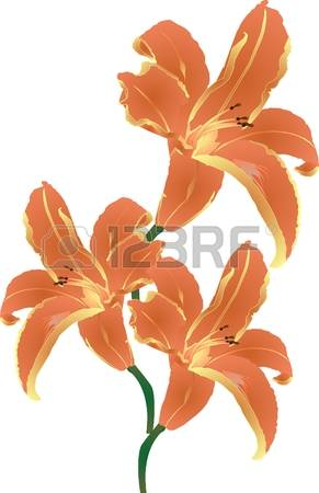 Tiger Lily clipart #13, Download drawings