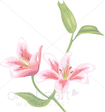 Tiger Lily clipart #6, Download drawings