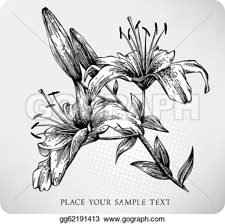 Tiger Lily clipart #3, Download drawings