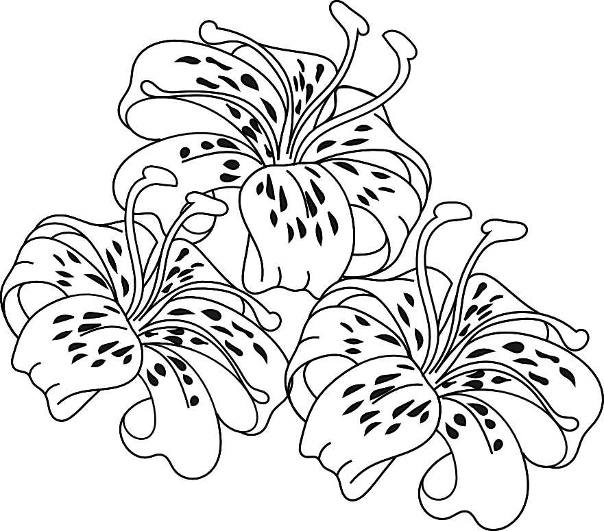Tiger Lily clipart #2, Download drawings