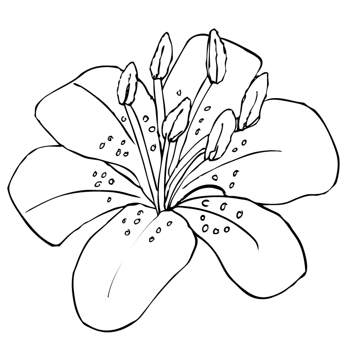 Tiger Lily clipart #20, Download drawings