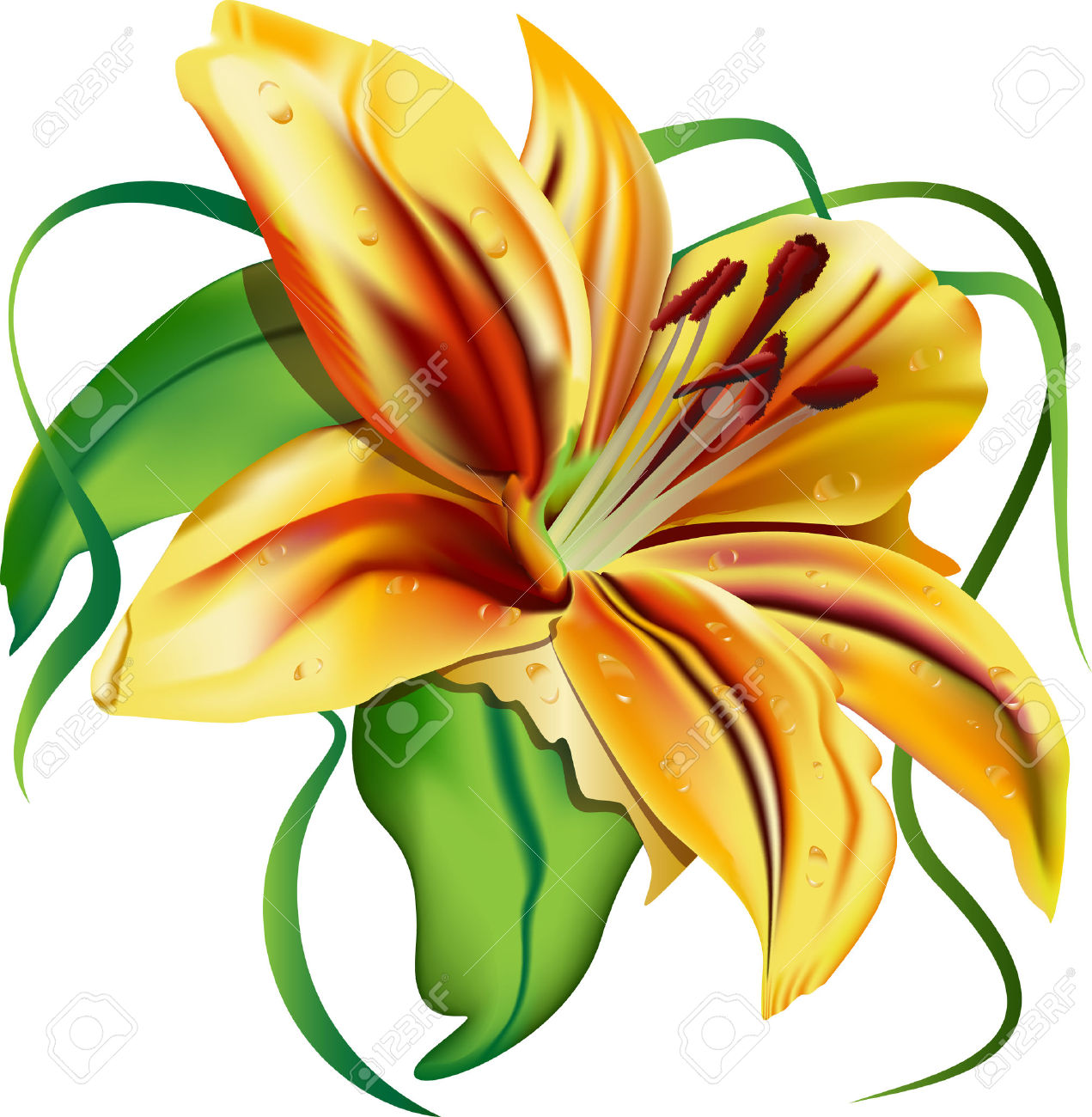 Tiger Lily clipart #15, Download drawings