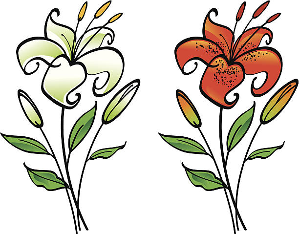Tiger Lily clipart #19, Download drawings
