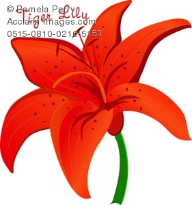 Tiger Lily clipart #5, Download drawings