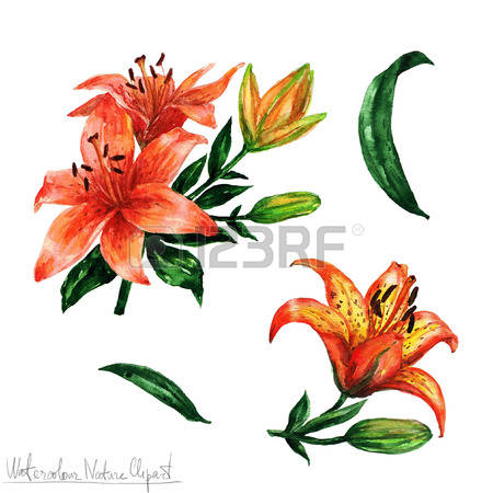 Tiger Lily clipart #14, Download drawings
