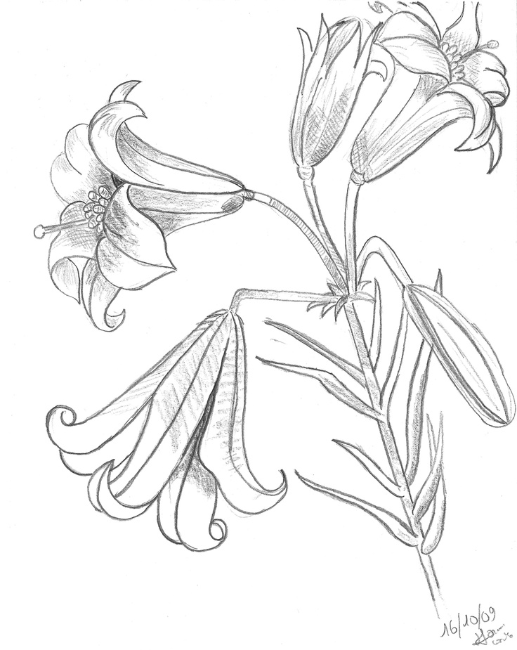 princess tiger lily coloring pages - photo#10