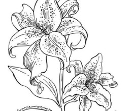 princess tiger lily coloring pages - photo#15