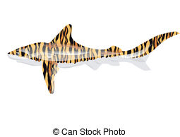 Tiger Shark clipart #13, Download drawings