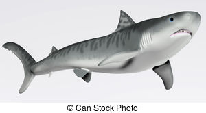 Tiger Shark clipart #16, Download drawings