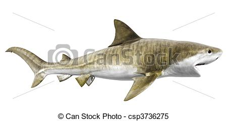 Tiger Shark clipart #8, Download drawings