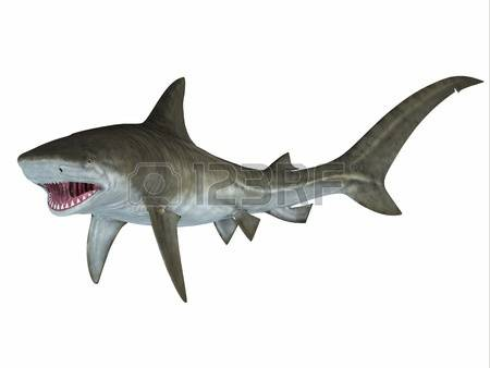 Tiger Shark clipart #11, Download drawings