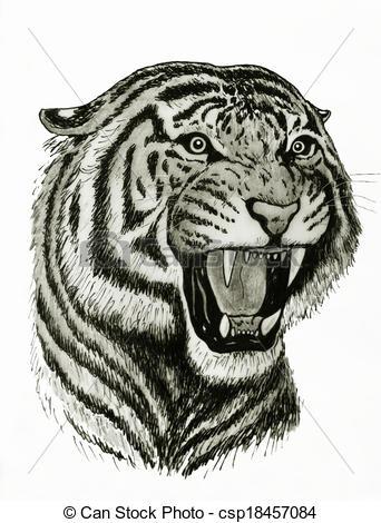 Tigre Bengala clipart #11, Download drawings