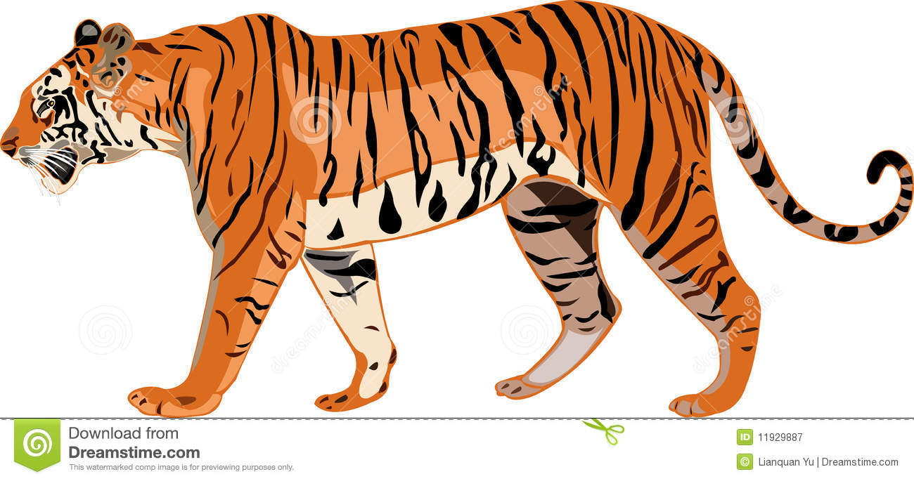 Tigre Bengala clipart #17, Download drawings