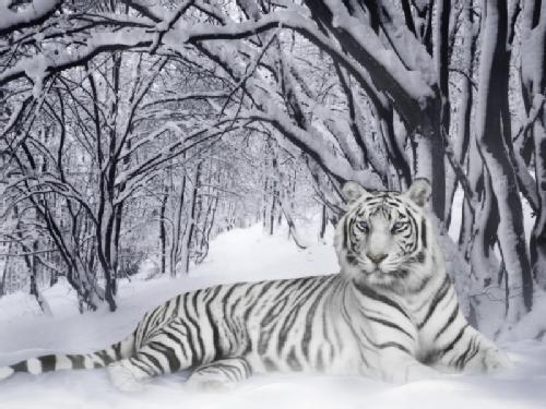 Tigre Bengala svg #11, Download drawings