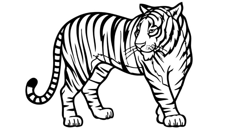 Tiiger coloring #8, Download drawings