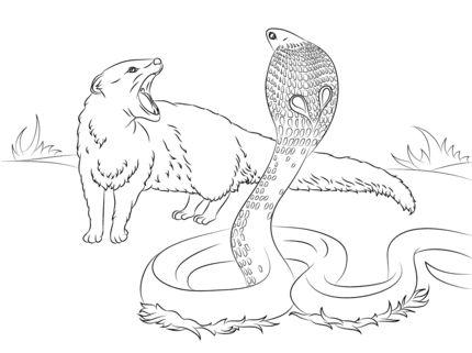 Tikki coloring #3, Download drawings