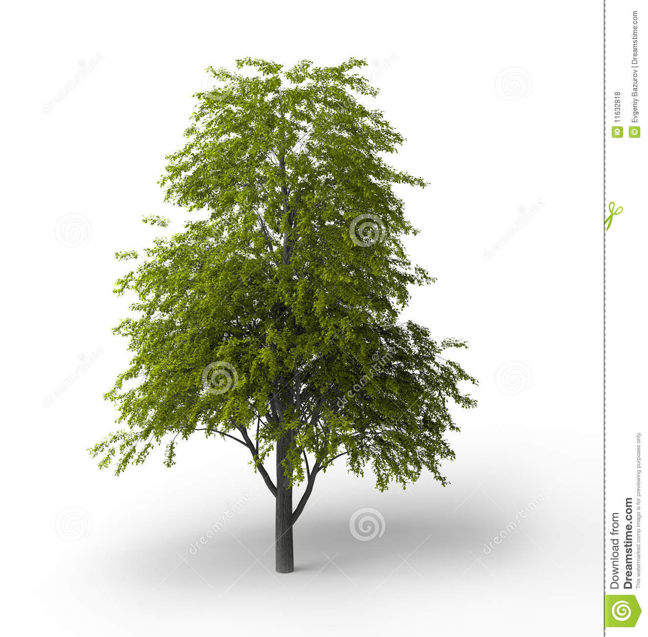 Tilia clipart #18, Download drawings
