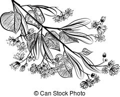 Tilia clipart #4, Download drawings
