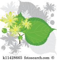 Tilia clipart #10, Download drawings
