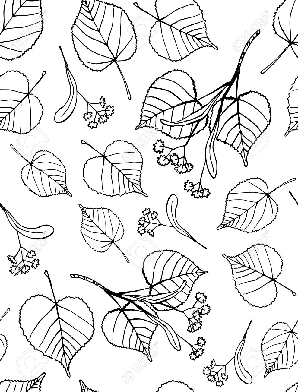 Tilia clipart #1, Download drawings