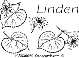 Tilia clipart #5, Download drawings