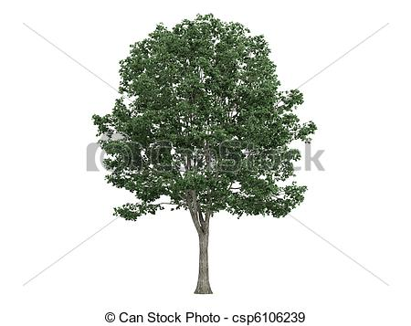 Tilia clipart #20, Download drawings