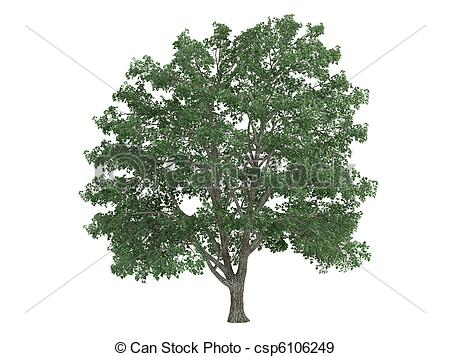 Tilia clipart #16, Download drawings