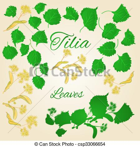 Tilia clipart #8, Download drawings