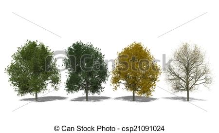 Tilia clipart #2, Download drawings