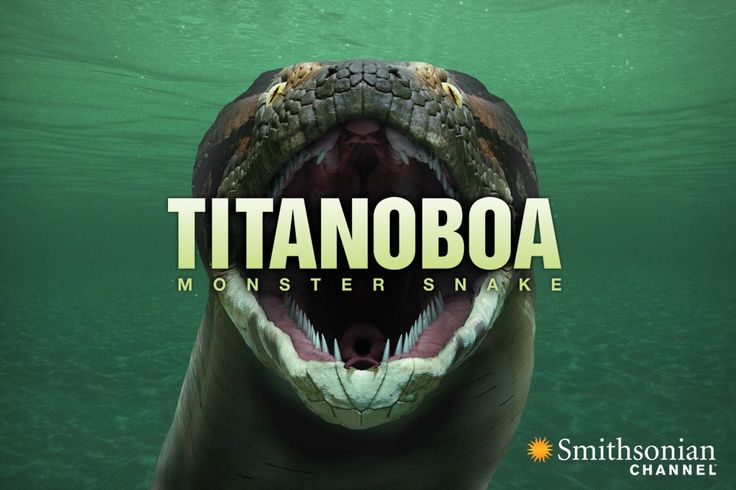 Titanoboa coloring #8, Download drawings