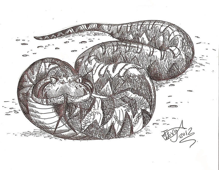 Titanoboa coloring #5, Download drawings