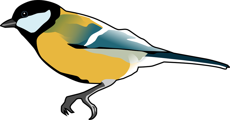 Titmouse clipart #1, Download drawings