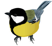 Titmouse clipart #14, Download drawings