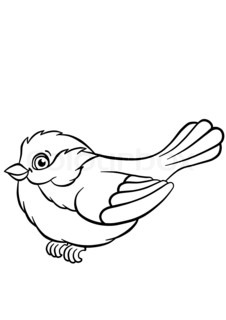 Titmouse coloring #2, Download drawings