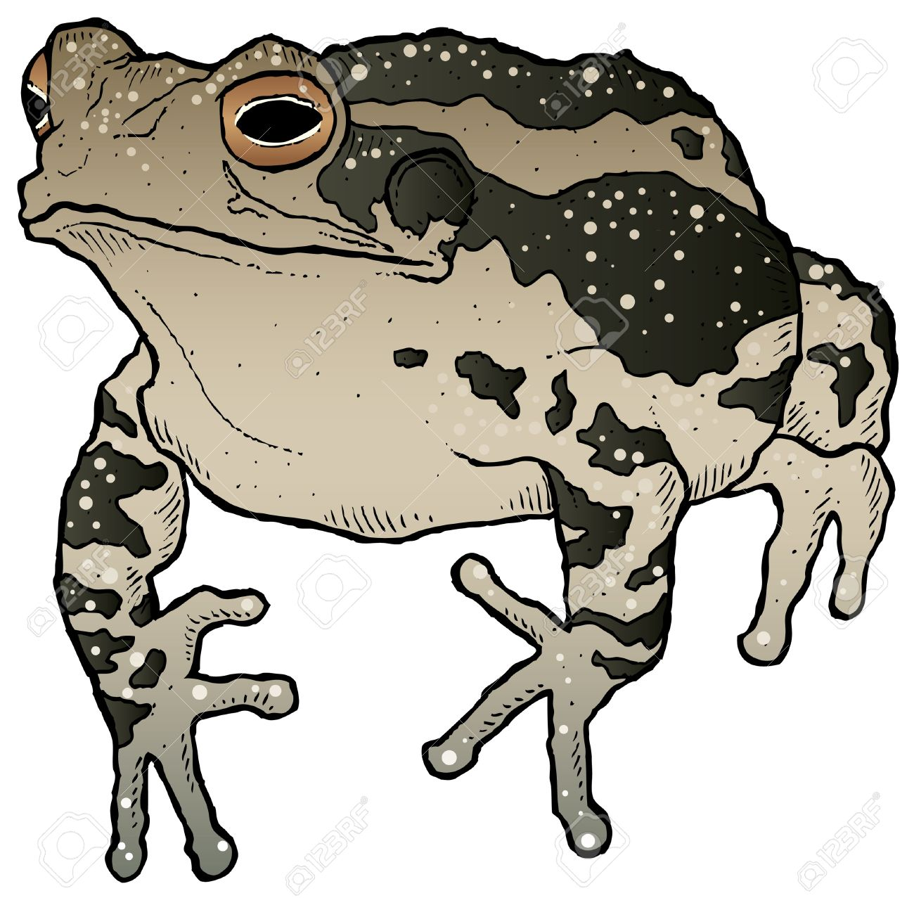 Toad clipart #11, Download drawings
