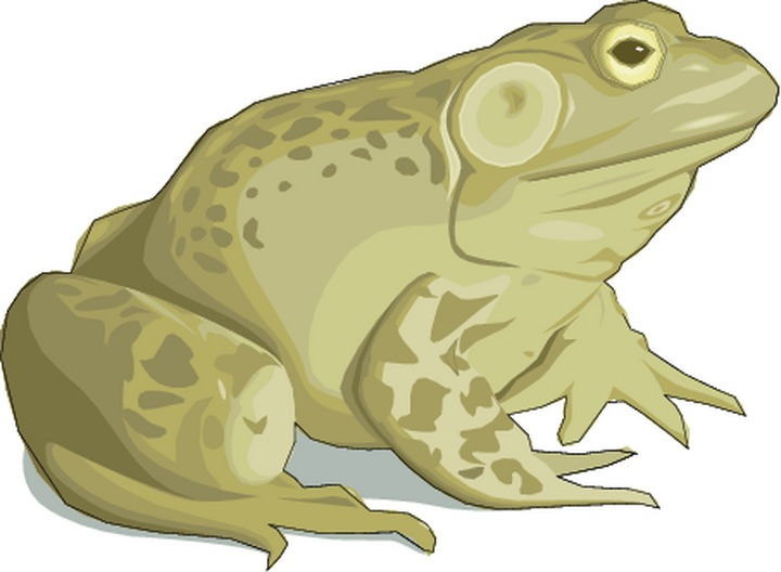 Toad clipart #20, Download drawings
