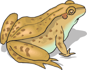 Toad clipart #5, Download drawings