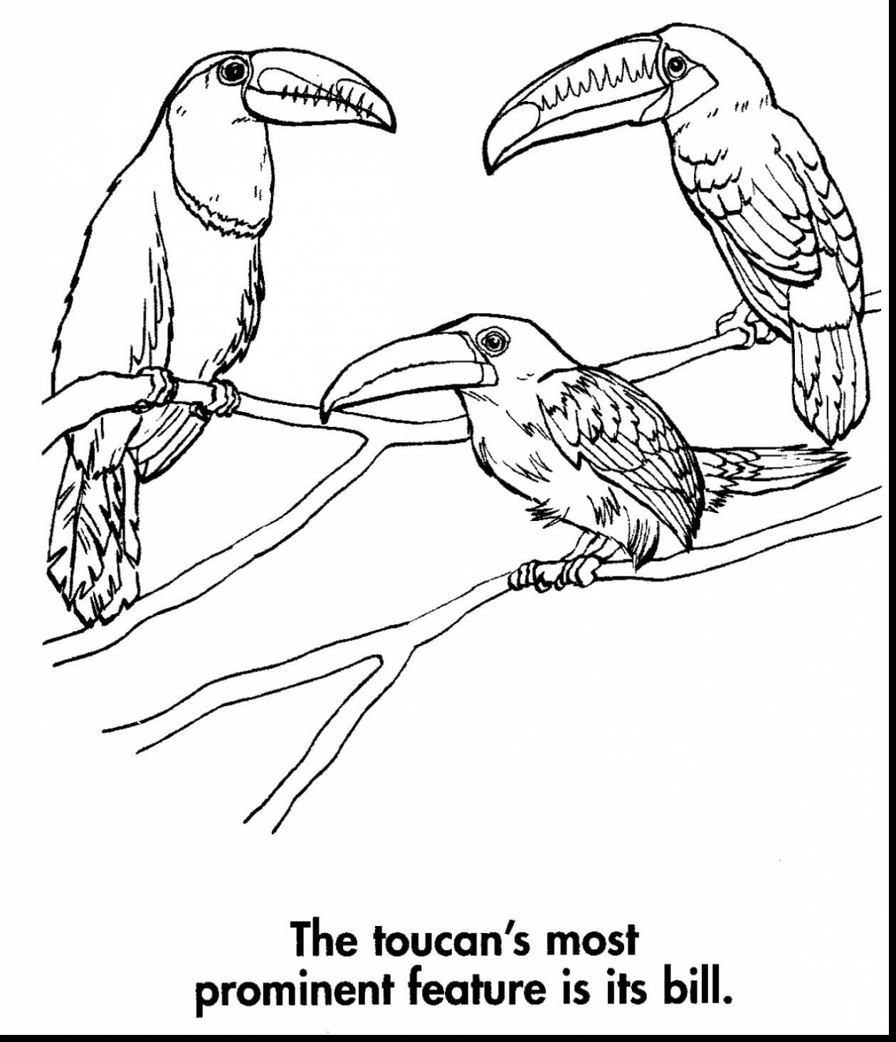 Download Toco Toucan coloring for free - Designlooter 2020