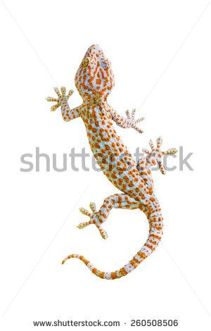Tokay Gecko clipart #8, Download drawings