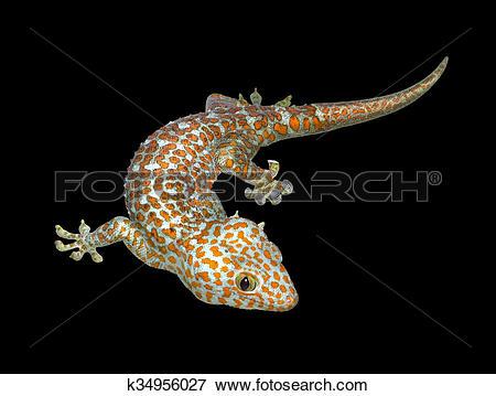 Tokay Gecko clipart #7, Download drawings