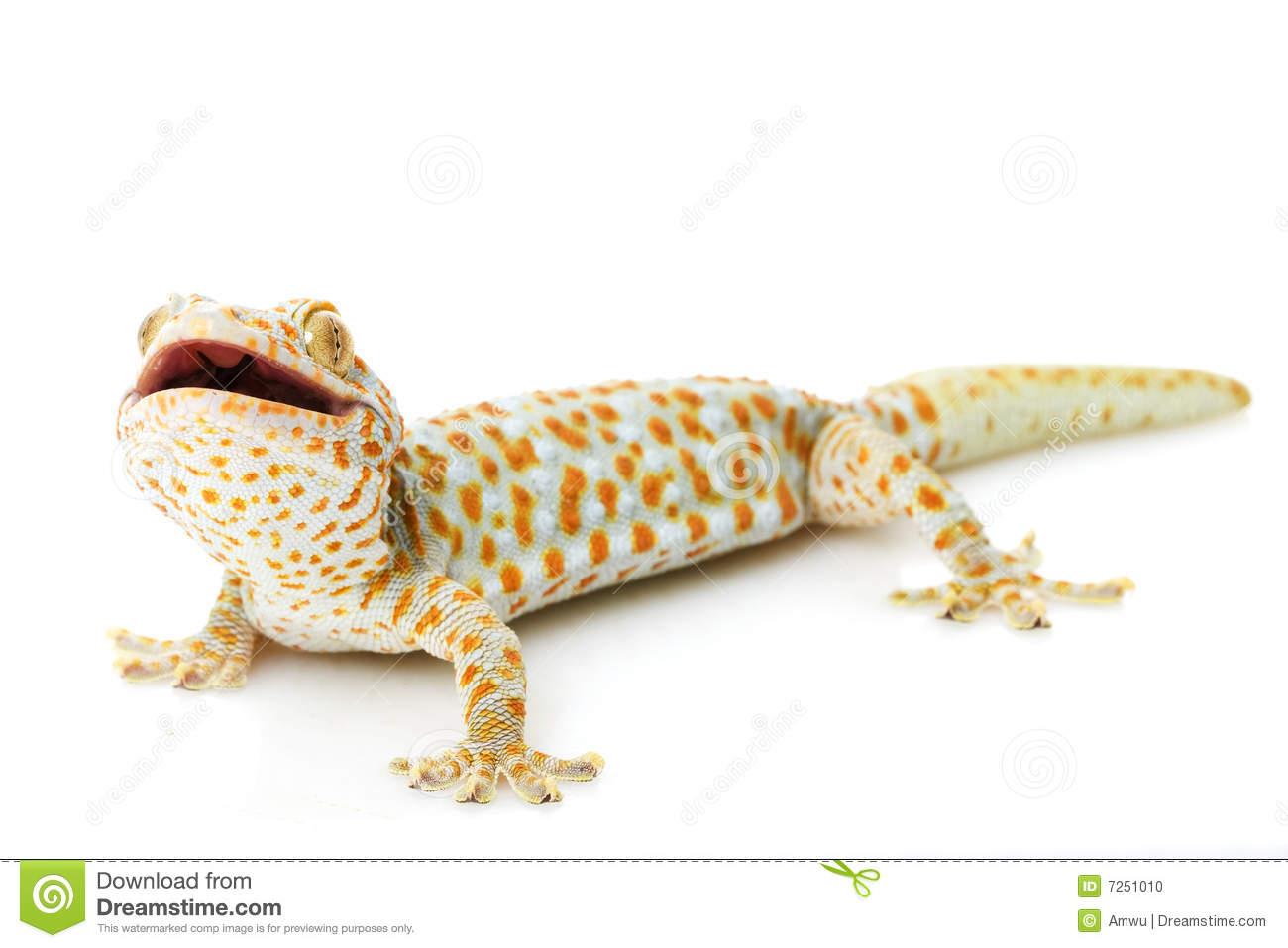 Tokay Gecko clipart #17, Download drawings
