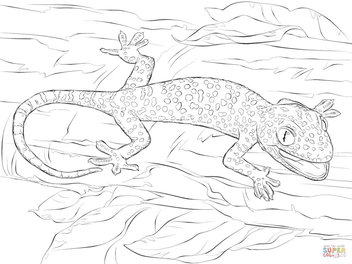 Tokay Gecko coloring #5, Download drawings