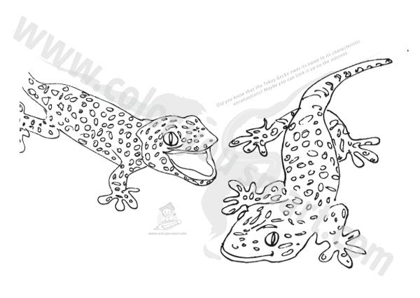 Tokay Gecko coloring #10, Download drawings