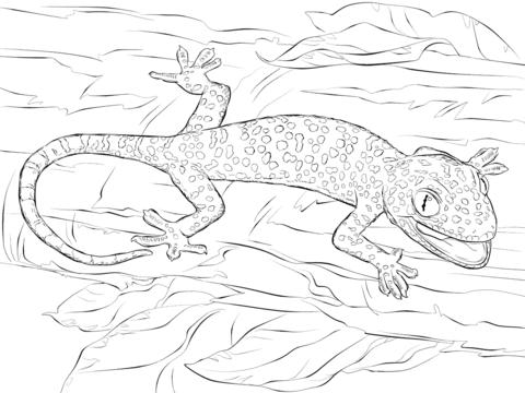 Tokay Gecko coloring #7, Download drawings